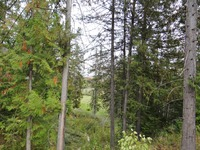 Home for sale: Lot 4 Burns Ct., Sandpoint, ID 83864