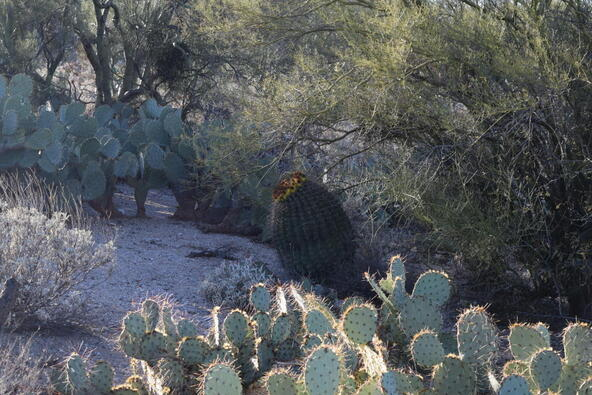 10601 E. Escalante, Tucson, AZ 85730 Photo 5