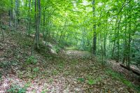 Home for sale: Tbd Back Hollow Rd., Saltville, VA 24370
