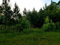 Home for sale: Panton- Leslie Ln., Crawfordville, FL 32327