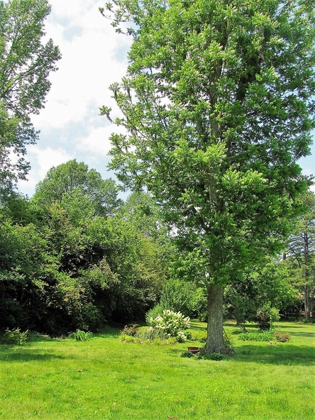405 Pecan St., Albertville, AL 35950 Photo 24