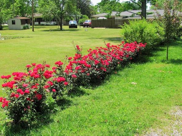 405 Pecan St., Albertville, AL 35950 Photo 3
