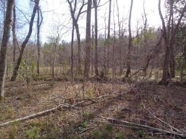 275+/-Ac Cty Rd. 46/Cty Rd 97, Abbeville, AL 36310 Photo 37