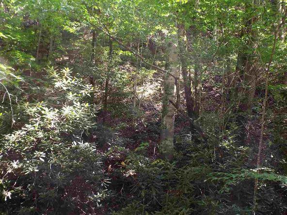Lots 537 & 538 Deep Hollow Rd., Gatlinburg, TN 37738 Photo 39