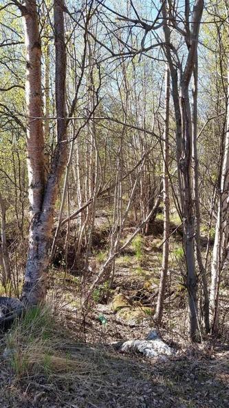 6321 N. Moose Meadows Rd., Wasilla, AK 99654 Photo 16
