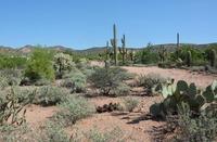 Home for sale: 1036 E. Tonto St., Apache Junction, AZ 85119