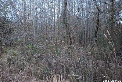 00 Roby Rd., Jacks Creek, TN 38347 Photo 2