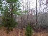 Home for sale: 0 Linda Ln., Linden, TN 37096
