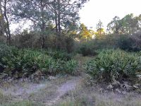 Home for sale: Yates Creek Rd., Perry, FL 32348