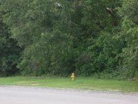 Home for sale: Bruin Dr., Orangeburg, SC 29115