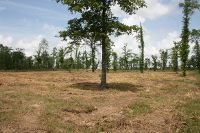 Home for sale: 2.50 Ac+- Hwy. 191 N. Of Zwolle, Noble, LA 71462
