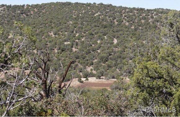 808 Sierra Verde Ranch, Seligman, AZ 86337 Photo 13