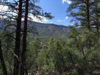 Home for sale: Calle Pinon Ln., Jemez Springs, NM 87025