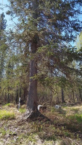 6321 N. Moose Meadows Rd., Wasilla, AK 99654 Photo 15