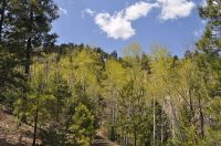 Home for sale: Lot Dr5a Cielo Vista Loop, Jemez Springs, NM 87025