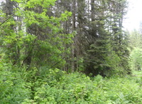 Home for sale: Tbd Pine Trail, Donnelly, ID 83615