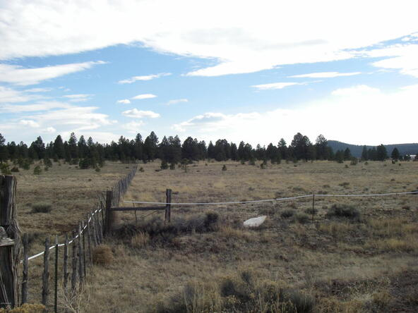 15 Acre E. Mountain Man Trail, Williams, AZ 86046 Photo 12