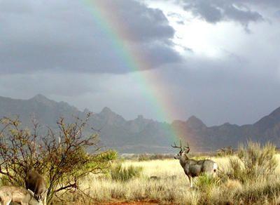 697092 E. Horse Ranch Rd., Saint David, AZ 85630 Photo 9