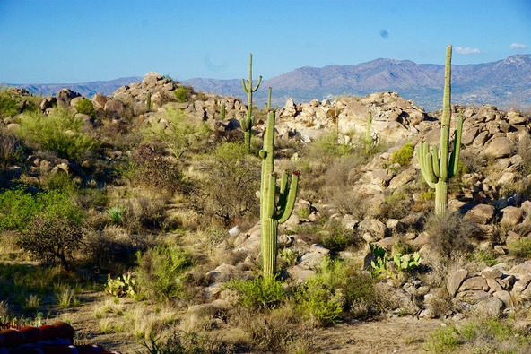 1361 W. Tortolita Mountain Cir., Oro Valley, AZ 85755 Photo 28