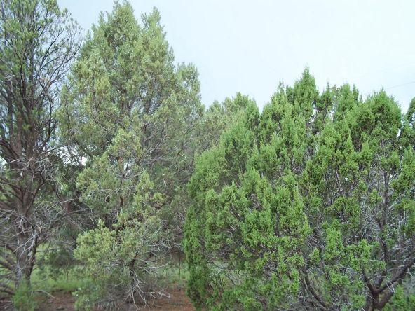 7937 N. Perrin Ln., Williams, AZ 86046 Photo 1
