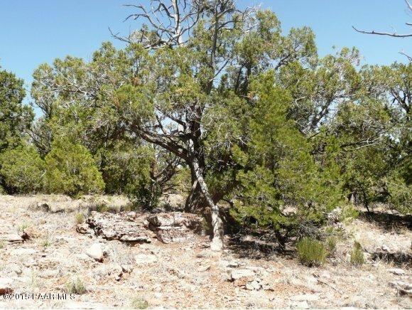 1024 Sierra Verde Ranch, Seligman, AZ 86337 Photo 17