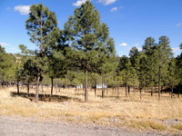 Home for sale: 304 College Dr., Ruidoso, NM 88345