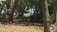 Home for sale: 0 Kamehameha V, Kaunakakai, HI 96748