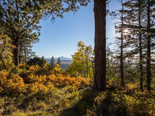 Tbd S. Sage Grouse Rd., Lot 10, Placerville, CO 81430 Photo 6