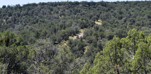 264 Sierra Verde Ranch, Seligman, AZ 86337 Photo 17