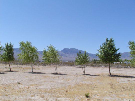 926 E. Vermillion St., Littlefield, AZ 86432 Photo 19