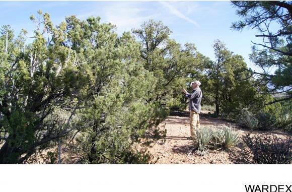 6731 N. Trap Springs Rd., Hackberry, AZ 86411 Photo 30