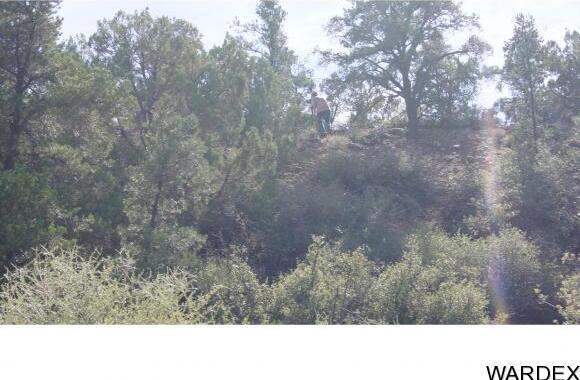 9999 N. Trap Springs Rd., Hackberry, AZ 86411 Photo 30