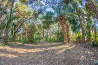 Home for sale: 403 Poinsettia Rd., Melbourne Beach, FL 32951
