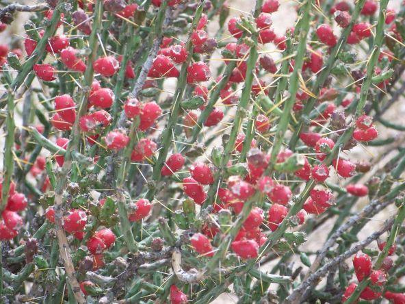 1326 N. Tanque Verde Loop, Tucson, AZ 85749 Photo 30