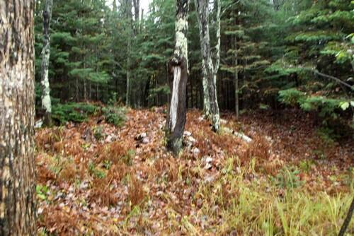 Lot 2 - 5813 Hwy. 70, Eagle River, WI 54521 Photo 6