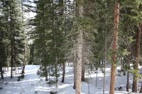 Home for sale: 155 Blacks Fork, Winter Park, CO 80482