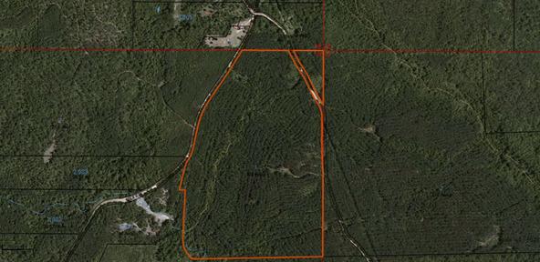 122 +/- Acres County Rd. 176, Five Points, AL 36855 Photo 20