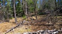Home for sale: R.L. Smith Logging Rd., Oak Run, CA 96069