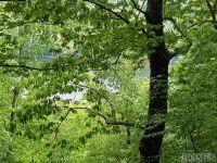 Home for sale: 0 Wild Blackberry Ridge, Cullowhee, NC 28723