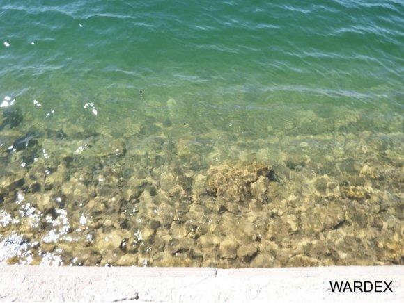 8530 Miraleste Shores Dr., Parker, AZ 85344 Photo 9