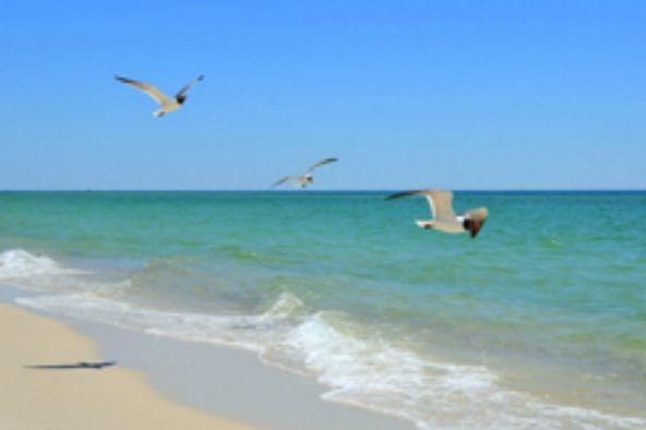4851 Wharf Pkwy, Orange Beach, AL 36535 Photo 27