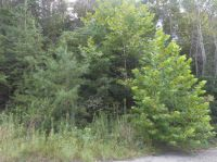 Home for sale: 0 Oakland Pkwy Lot 16 & 23, Borden, IN 47106