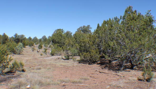 8 Acres Off Of Acr N. 3114, Vernon, AZ 85940 Photo 7