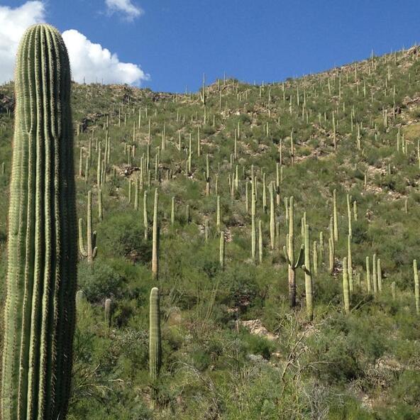 6991 E. Eagle Point, Tucson, AZ 85750 Photo 33
