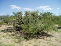 Home for sale: 16401 Cowboy W., Tucson, AZ 85736