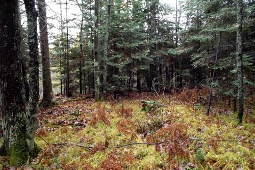 Lot 2 - 5813 Hwy. 70, Eagle River, WI 54521 Photo 7