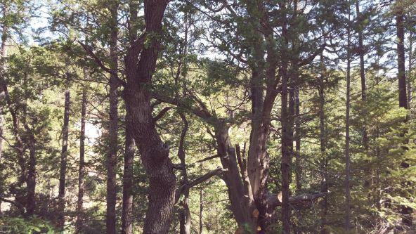 2655 E. Preddy, Prescott, AZ 86305 Photo 33