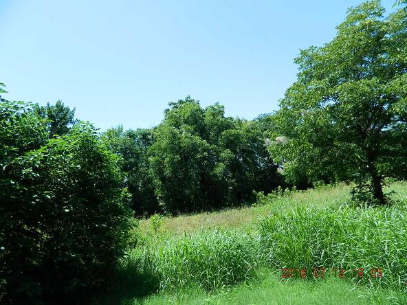 3.21 Acre Off Railroad St., Coal Hill, AR 72832 Photo 5