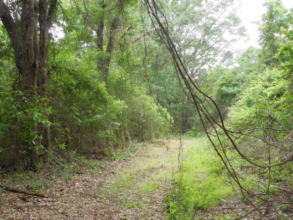 7.8acres Hardy Rd., Rehobeth, AL 36301 Photo 19