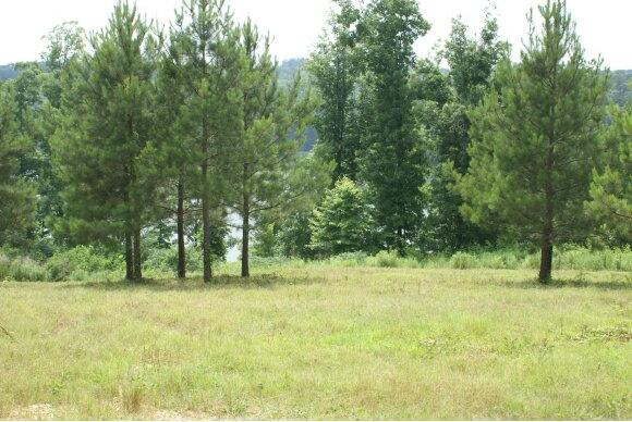 272 Co Rd. 907 (Lot 11), Crane Hill, AL 35053 Photo 2